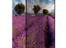 Paraván - Lavender field in Provence, France [Room Dividers]